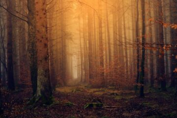 The Path in The Woods, a poetry by Dr. K. K. Matthew at Spillwords.com