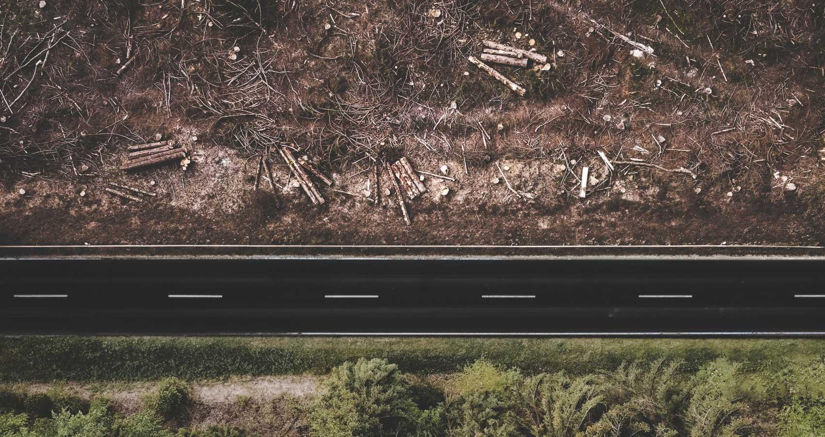 Deforestation, a poem by Adithya Patil at Spillwords.com