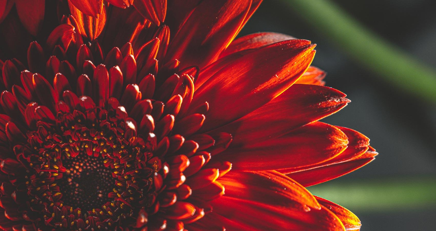 Inferno, a poem by Carmen Frech Oliveri at Spillwords.com