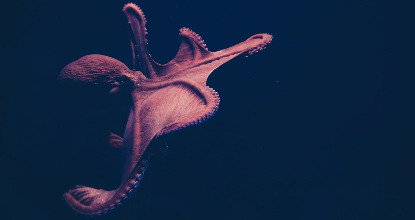 Octopus Damsel, a poem by Milagros Vilaplana at Spillwords.com
