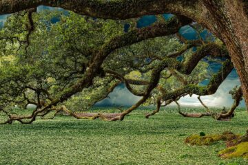 A Tree Most Ancient, story by Christopher Johnson at Spillwords.com