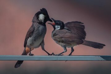 Chirp Birdie! Chirp, a short story by Vrunda Moghe Dev at Spillwords.com