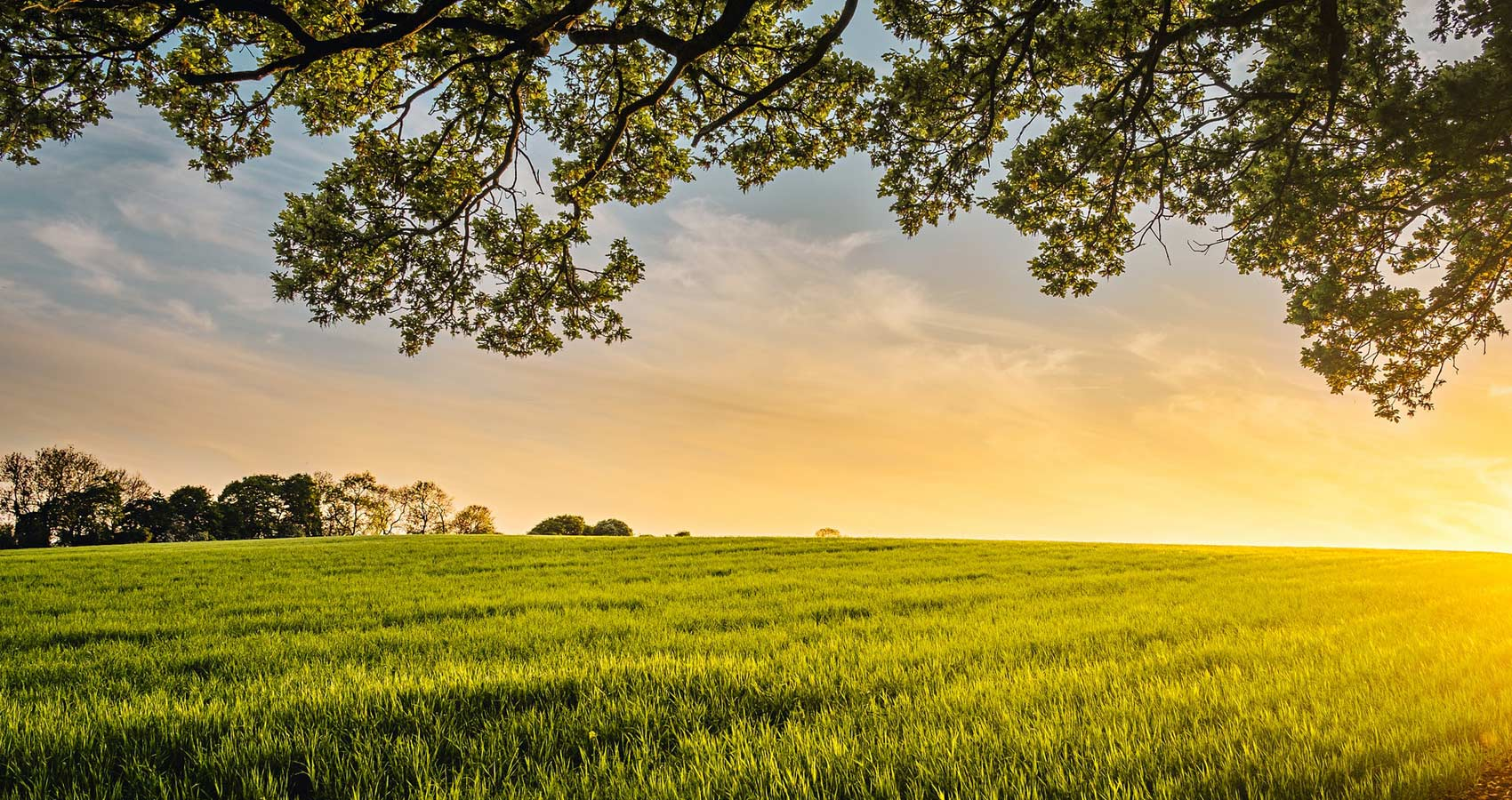 Rural Reflections, a poem by Adrienne Rich at Spillwords.com