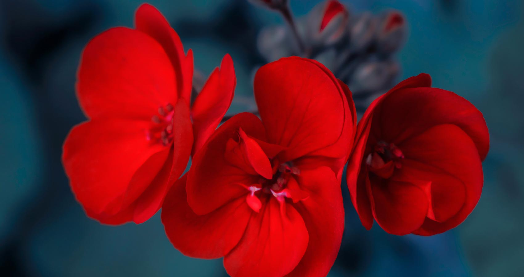 Tell Me, O, You Blissful Blossom, a poem by Arun Verma at Spillwords.com