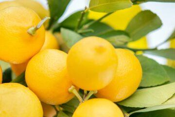 When Life Gives You Lemons, poetry by Elizabeth Sams at Spillwords.com