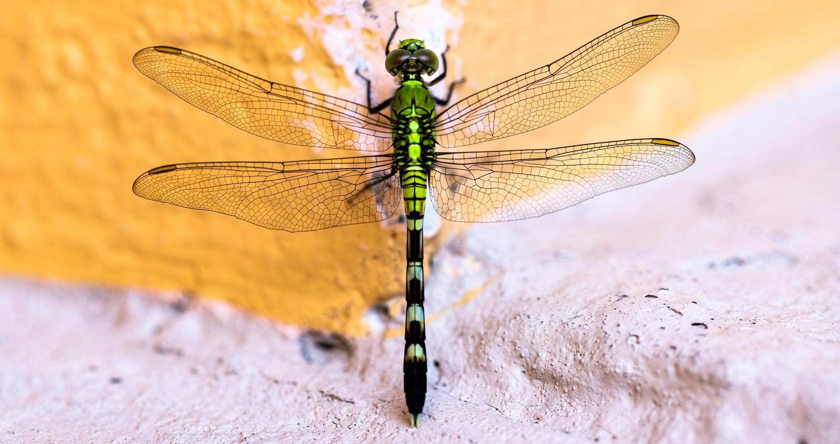Behold The Dragons and The Damsels, poetry by Nishand Venugopal at Spillwords.com