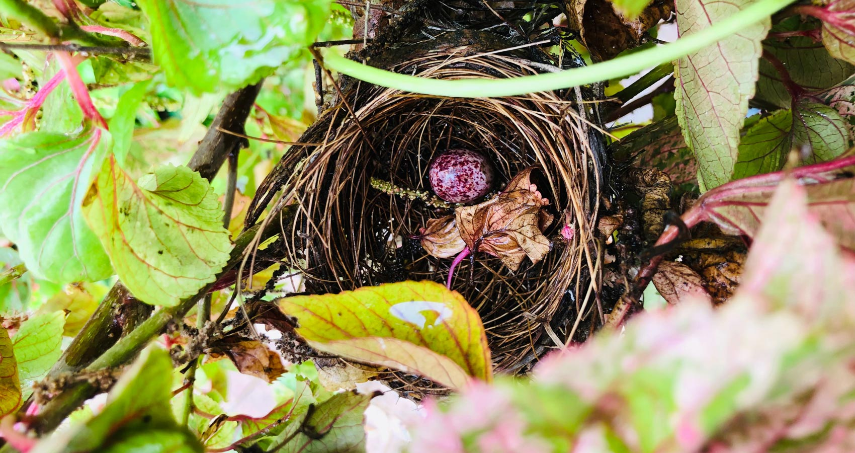 Hatched, a poem written by D.M. Velay at Spillwords.com