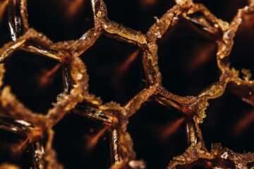 Hive, poetry written by Stephen Kingsnorth at Spillwords.com