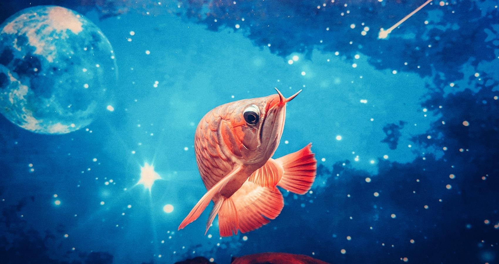 The Shark, a poem by Aurora Kastanias at Spillwords.com