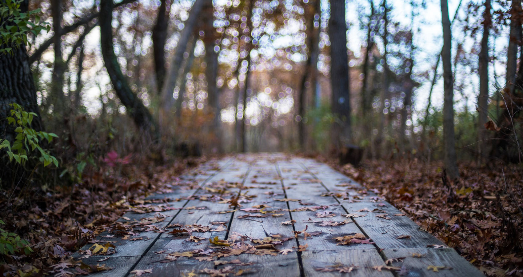 The Worn Path of Souls, poetry written by Glen Mckenzie at Spilwords.com