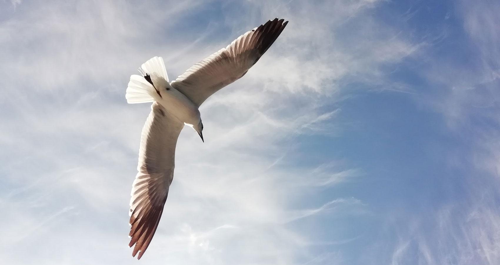 Life As An Albatross, short story written by Karen Bayly at Spillwords.com