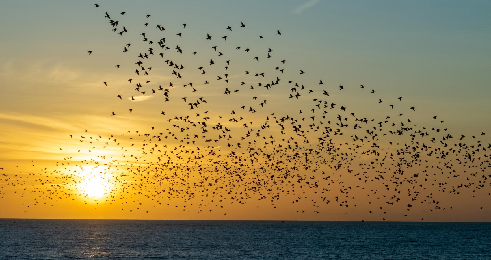 Murmuration, a poem by Paul Thwaites at Spillwords.com
