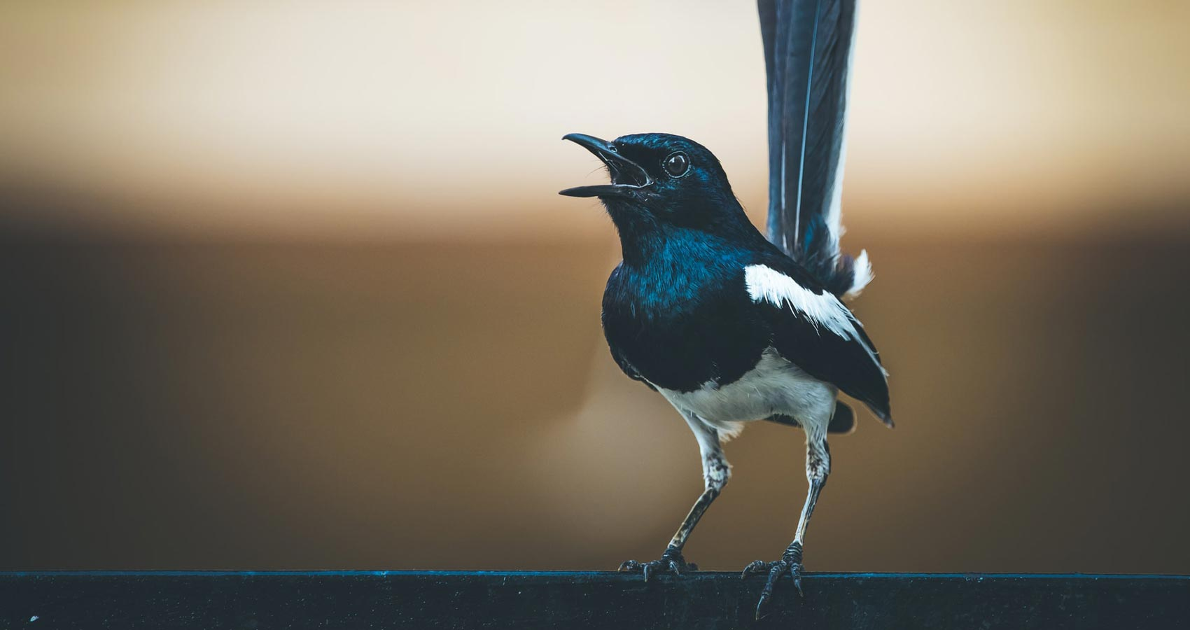 The Magpie, short story by Patrick McAteer at Spillwords.com