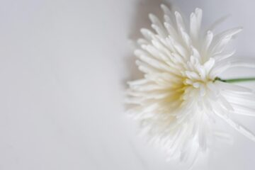 A Lone Chrysanthemum, poetry by Wayne Jermin at Spillwords.com