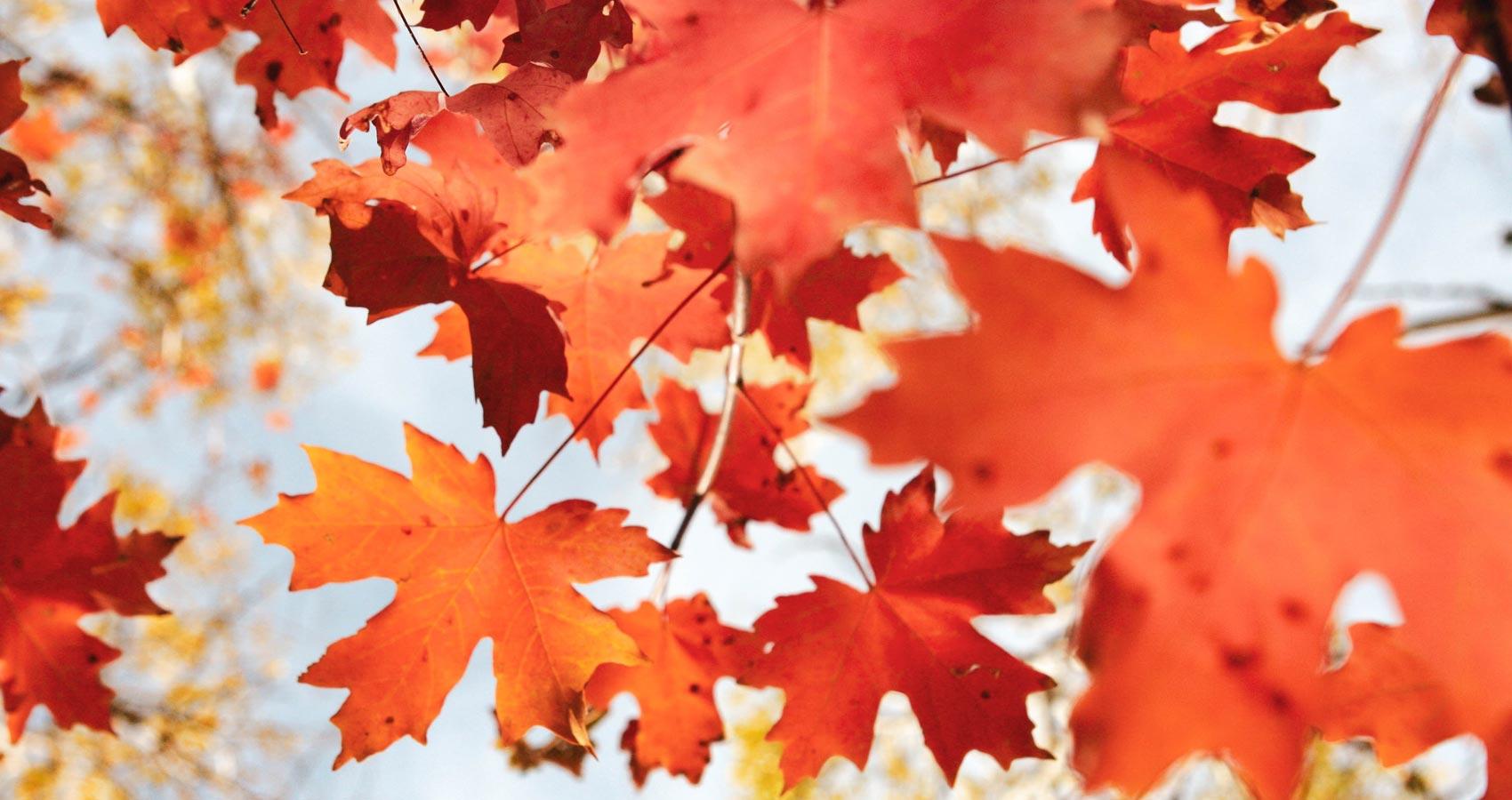 Autumn Leaves, a poem by Srinidhi Jitesh Menon at Spillwords.com