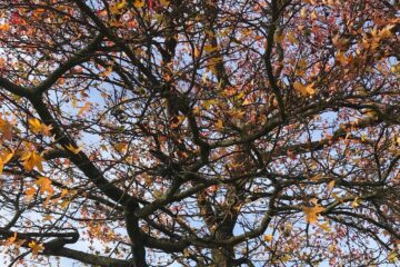 Autumn, a poem by Glynn Sinclare at Spillwords.com