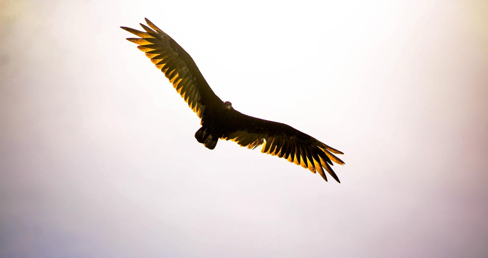 Calling All EAGLES, a poem by Fay Marmalich-Vietmeier at Spillwords.com
