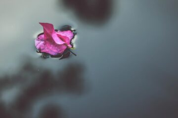 Petals in The Pool, a poem by Charlie Bottle at Spillwords.com