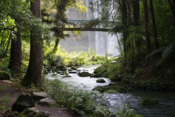 Show Me The Way To The River, a poem by Mary Bone at Spillwords.com