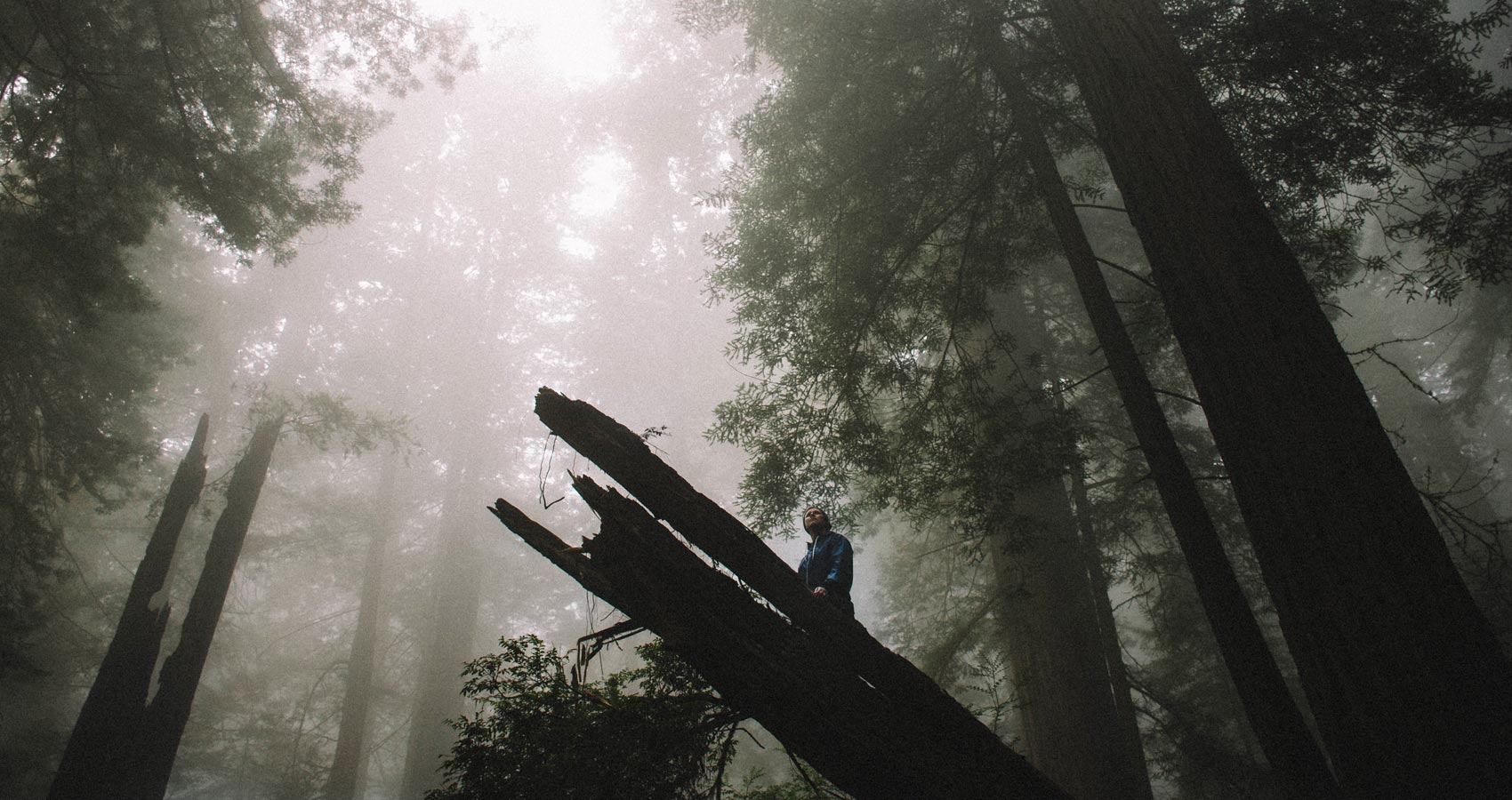 Trees, poetry written by S.D. Kilmer at Spillwords.com