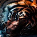 A Tiger In A Cage, poetry by Paula Puolakka at Spillwords.com