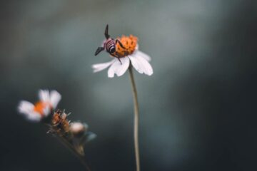 Telling The Bees, a short story by Lauren Evans at Spillwords.com