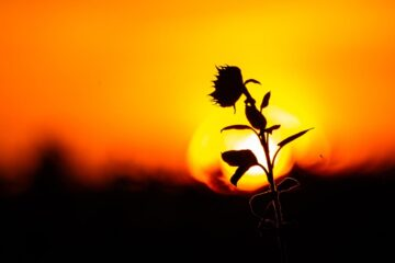The End Of The Burning Hot Suns, poetry written by Wieslaw W Falkowski at Spillwords.com