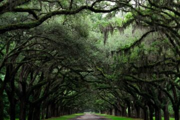 These Trees, poetry written by Roger Turner at Spillwords.com